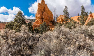 Bryce Canyon/ Red Rock Canyon